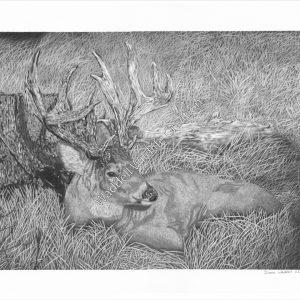 Comfortably Hidden - Waddell Wildlife Creations