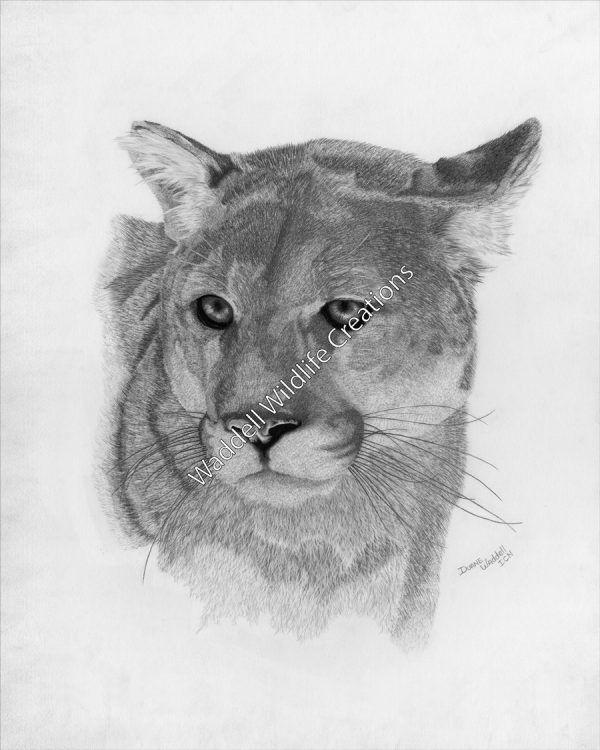 Don't Bother Mountain Lion - Waddell Wildlife Creations