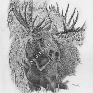 Focused - Waddell Wildlife Creations