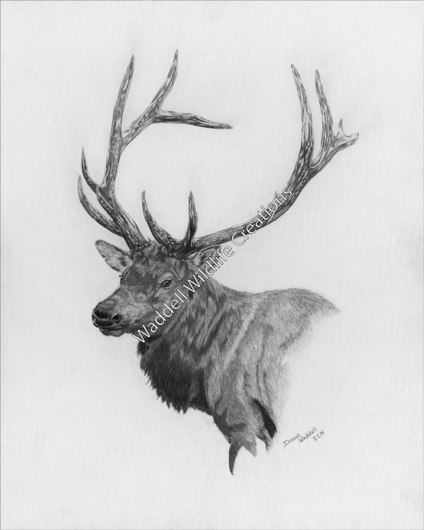 Majestic Elk - Waddell Wildlife Creations