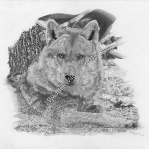 Undertermined Intentions - Waddell Wildlife Creations