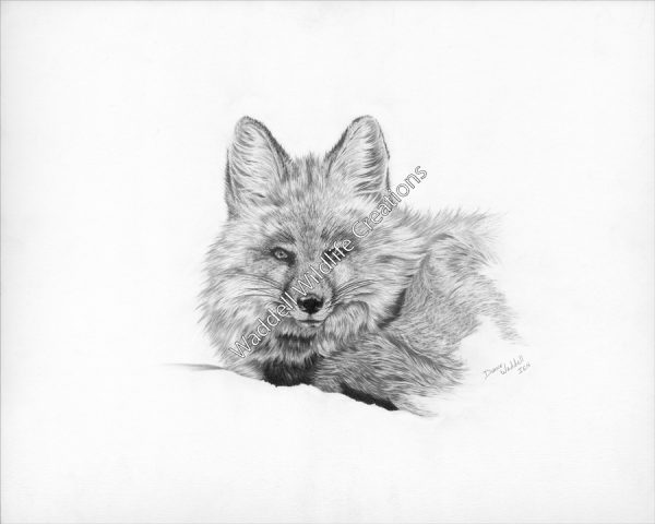 Winter Fox - Waddell Wildlife Creations
