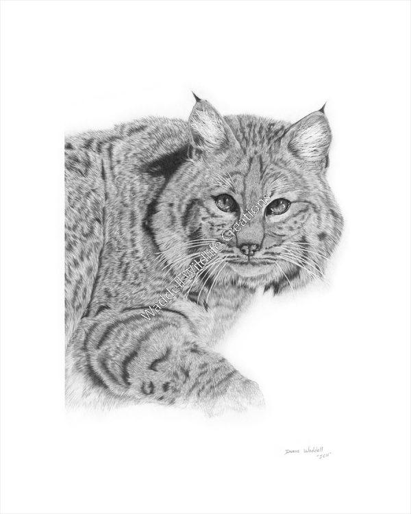Bobcat Print