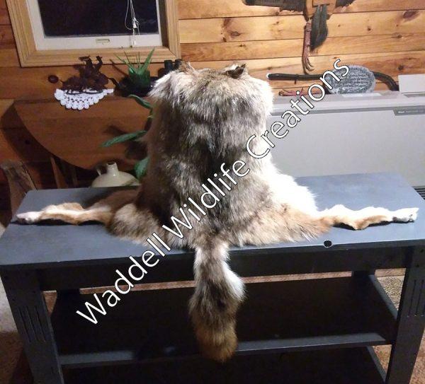 Coyote Mountain Man - Back