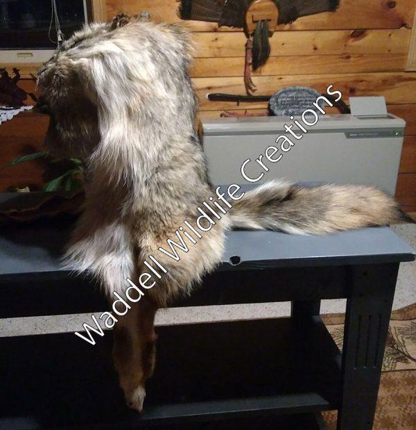 Coyote Mountain Man - Side B